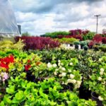 Croppers Greenhouse 5